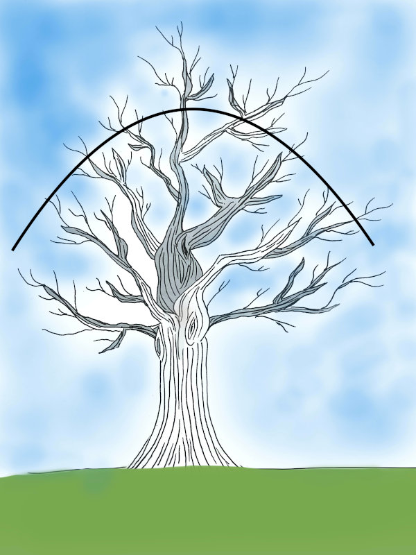 Baumhöhe reduzieren-600
